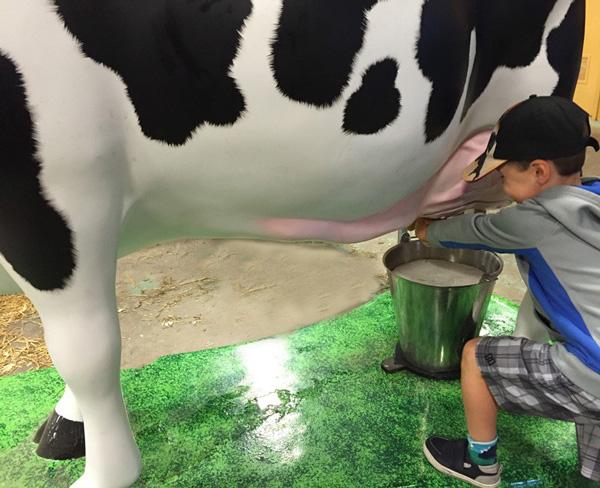 Traire les vaches